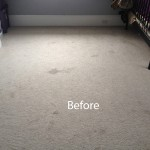 Bedroom-Wall-to-Wall-Carpet-Cleaning-Campbell-A