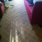 Campbell-Carpet-Clean-before